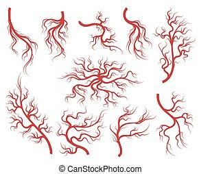 veines, ensemble, capillaire, icônes