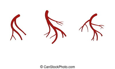 Veins revealing and filling with blood isolated on white background. Medical illustration 4k