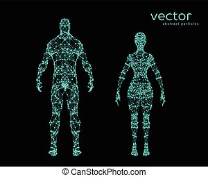 vektor, ábra, közül, hím női, test