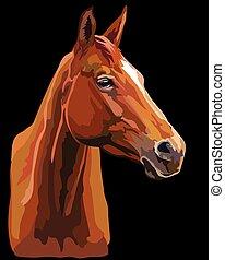 vektor, 25, bunte, pferd, porträt