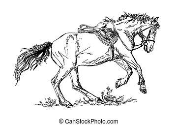 vektor, amerikai félvad ló