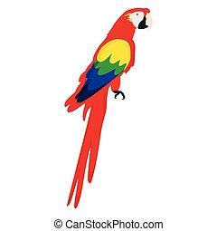 vektor, ara, papegoja