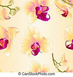 vektor, beschaffenheit, phalaenopsis, orchidee, gelber , ...