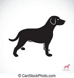 vektor, bild, von, ein, hund, labrador