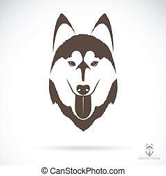 vektor, bild, von, ein, hund, sibirischer schlittenhund