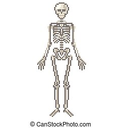 vektor, bildpunkt, mänsklig skeleton