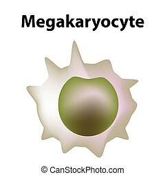 vektor, blod, megakaryocyte, cell., infographics., bakgrund...