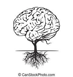 vektor, brain., illustration, mänsklig