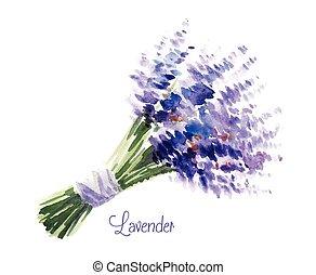 vektor, bukett, vattenfärg, lavender.