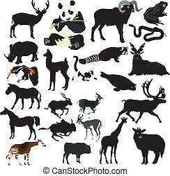 vektor, dyr, samling