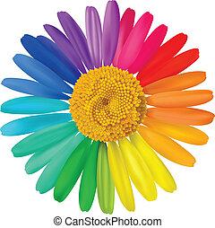 vektor, färgrik, daisy.