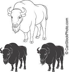 vektor, fekete, fehér, állhatatos, arcmás, bölény