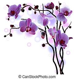 vektor, filial, av, violett, orkidéer