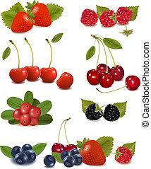 vektor, frisk, stor, gruppe, berries