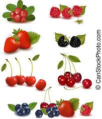 vektor, frisk, stor, gruppe, berries, illustration