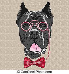 vektor, furcsa, karikatúra, csípőre szabott, kutya, sétabot,...