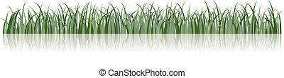 vektor, gräs, illustration