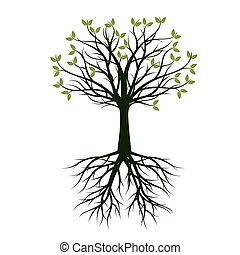 vektor, grønne, root., træ, illustration.
