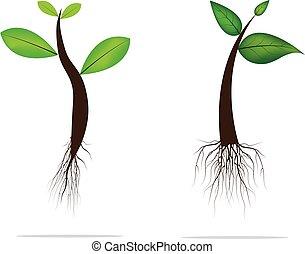 vektor, grün, plant.