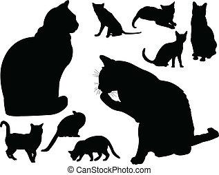 vektor, -, gyűjtés, macska