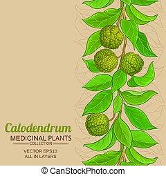 vektor, háttér, calodendrum