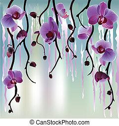 vektor, háttér, orhideák
