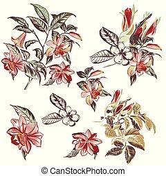 vektor, húzott, flowers.eps, gyűjtés, kéz