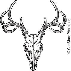 vektor, hjort, kranium