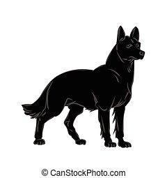 vektor, hund, bild
