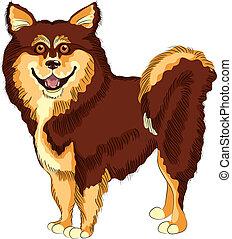 vektor, hund, lapphund, rasse, lächelt