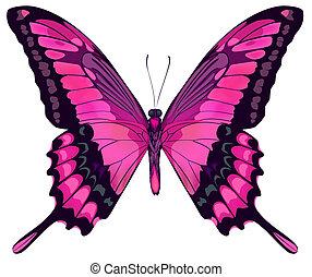 vektor, iillustration, av, vacker, rosa, fjäril, isolerat,...
