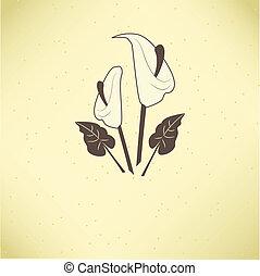 vektor, ilustrace, o, calla lilie