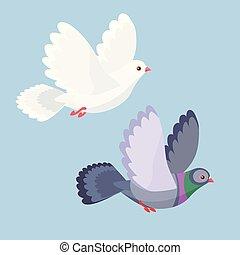 vektor, ilustrace, o, holub, a, holub, let