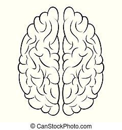 vektor, information, begrepp, kunskap, gyrus, själ, ...