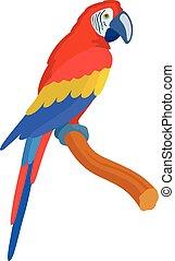 vektor, isolerat, röd, papegoja, illustration