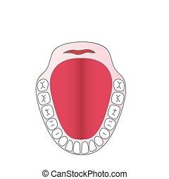 vektor, käke, person, tänder