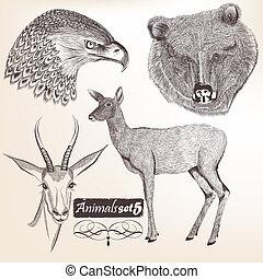 vektor, kéz, állatok, húzott, gyűjtés