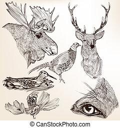 vektor, kéz, állatok, húzott, gyűjtés, tervezés