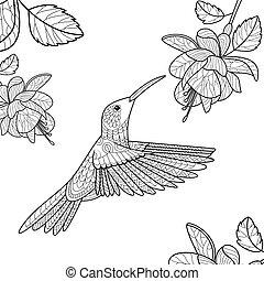 vektor, könyv, színezés, felnőttek, kolibri