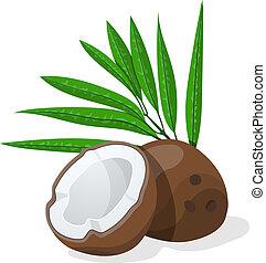 vektor, kokosnötter, leaves., illustration.