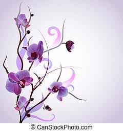 vektor, kort, med, orkidé filial