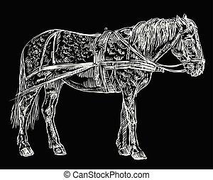 vektor, ló, hám, fekete