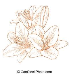 vektor, liliomok, flowers.