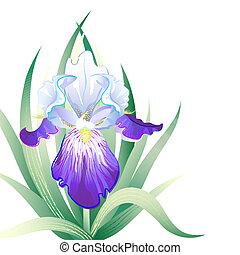 vektor, lov, kort, med, iris, blomma