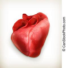 vektor, mänsklig hjärta