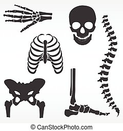 vektor, mänsklig skeleton