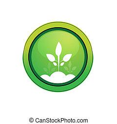 vektor, pflanze, ikone