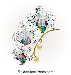 vektor, phalaenopsis, orchidee, multi gefärbt, stamm