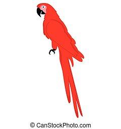 vektor, röd, papegoja