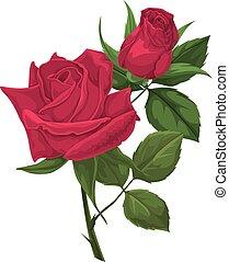vektor, rose., rotes